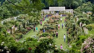 brooklyn botanic garden [june 10, 2012] by susan wides